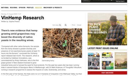 La coltivazione di canapa favorisce i lieviti indigeni sulla vite
